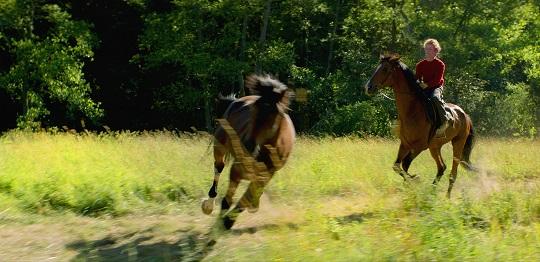 Horses_klein_201912851_1.jpg